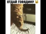 "Жадный кот ""отдай говядину""⁄Greedy cat ""give the beef"""