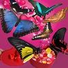 Живые бабочки в Москве Babo4ek.net