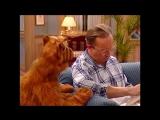 Alf Quote Season 1  Episode  24 Подписи