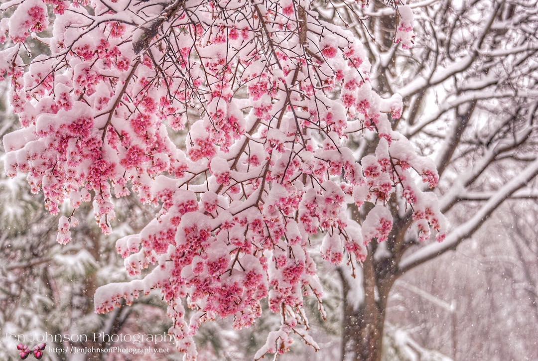 SnowfallsUSASnowfalls 21 March 2018©Jen Johnson