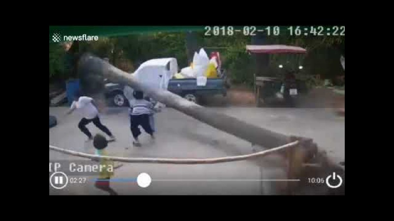 Two year old boy narrowly avoids being crushed by palm tree