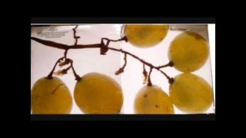 Wilbert Longmire - Champagne (full album)