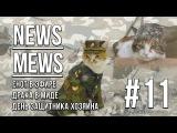 News Mews #11. День защитника хозяина