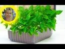 БАРБОТИРОВАНИЕ НЕОБЫЧНАЯ РАССАДА Уникальный способ выращивания рассады перцы томаты