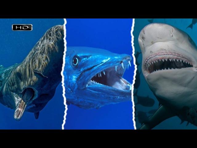 Зубастый поезд, кровожадная торпеда, агрессивный монстр - Кашалот, Барракуда, Тупорылая акула