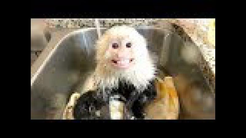 Baby Monkey LOVES Hot Bath!