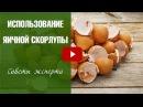 Яичная скорлупа ➡ ТОП 10 способов применения 🌟 HitsadTV о полезном