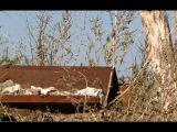Avdiivka 100 meters from Ukrainian positions/ Промка В 100 метрах от украинских позиций