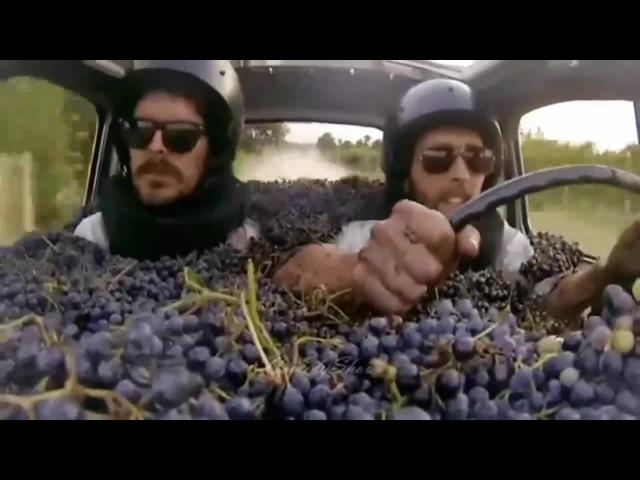 დაილოცოს ყურძენი და პურ მარილი კახურიო coub