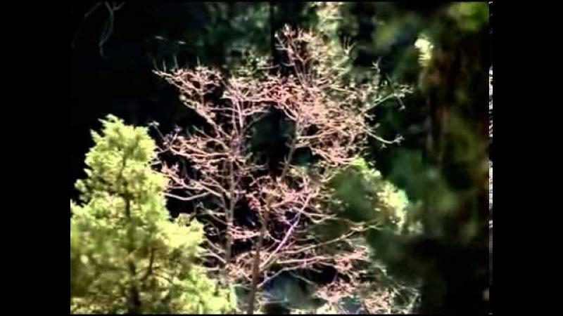 003 El hombre y la Tierra - Los señores del bosque parte 1