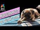 Жевательная косточка Делайтс Порк Обзор лакомства для собак 8in1 Dog's Bone review