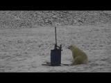 Polar bear's selfies from Wrangel Island