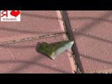 Вольнянские вандалы раскурочили городскую ёлку