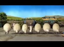 Смешные овцы танцуют ирландский танец. Барашек Шон.
