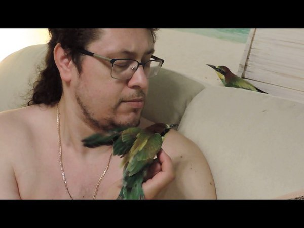 Merops apiaster-Золотые щурки