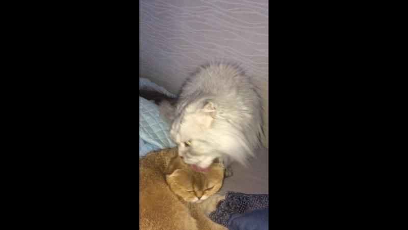 Микка любит Мелиссу