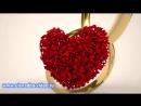 Футаж LOVE из лепестков розы с обручальными кольцами