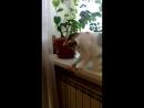 Ping-pong cat