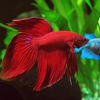 Аквариумистика: аквариумы и аквариумные рыбки