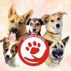 Приют для Бездомных бродячих собак! Красноуфимск