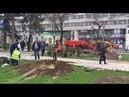 В Екатерининском саду в Симферополе высаживают деревья