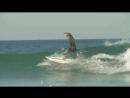 Сёрфинг на шпильках и в вечернем платье ! Продемонстрировала карибская профессиональная серфингистка и модель Мод Ле Кар