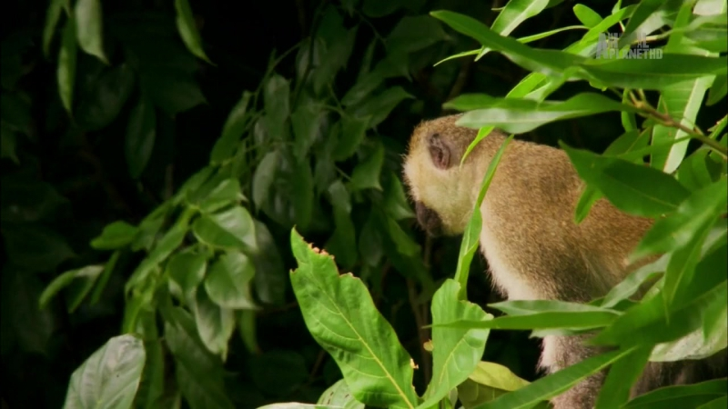 Неизведанные острова / Wildest Islands S01E01 Zanzibar - Land of Giants