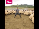 Антон Птушкин — повелитель овец