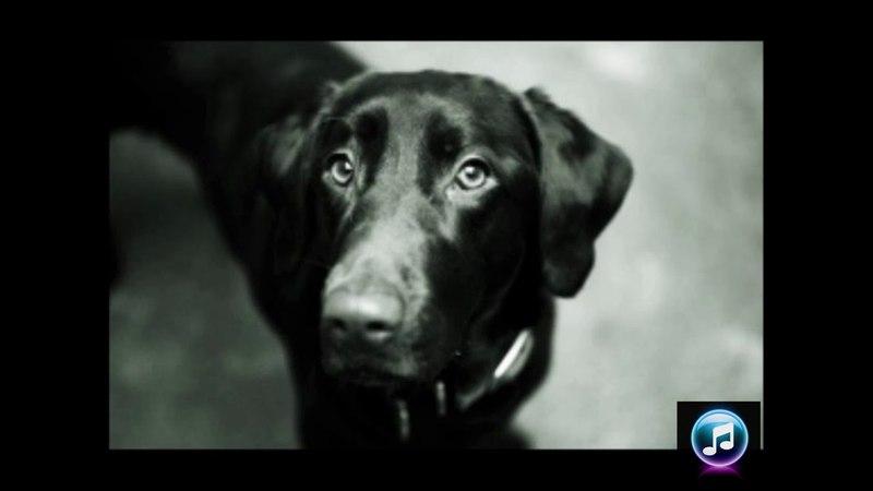 анс. Воркутинцы. Мой славный пёс. ( Бродяга пёс )