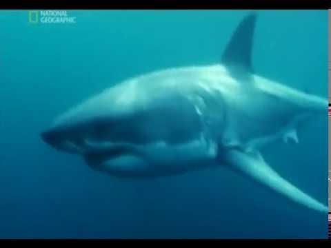 Нападения Акул / Shark Attacks (National Geographic)