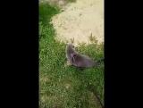 Я гуляю с кошкой Соней