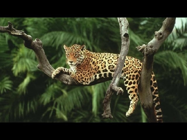Epic Jungle Music - Jaws of the Jaguar