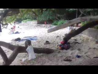 MONKEY AND VARAN STEAL FOOD !) PHRANANG BEACH, THAILAND