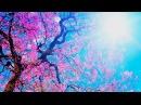 Шикарная, Красивая мелодия Просто фантастика! Дмитрий Метлицкий Оркестр/Instrumental music