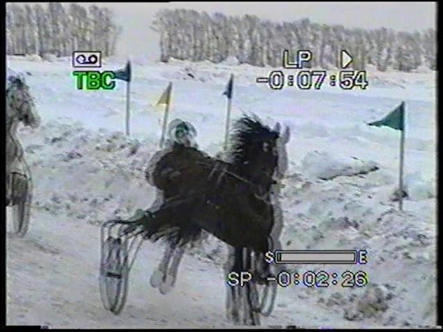 Октябрьский 2010 - лошади ст.возр.орл.рыс.пор.