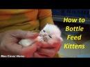 Baby Cat Drinking Milk from Feeding Bottle | Kittens Being Bottle Fed | Meo Cover Home