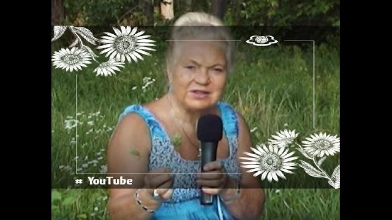Подорожник Цикорій Серцева кропива Дика морква Серпень 2013