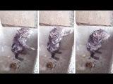 Крыса принимает душ в раковине [NR]