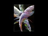 DA11 Violet Feathers (1) Acrylic Pour Art with Sandra Lett 012118