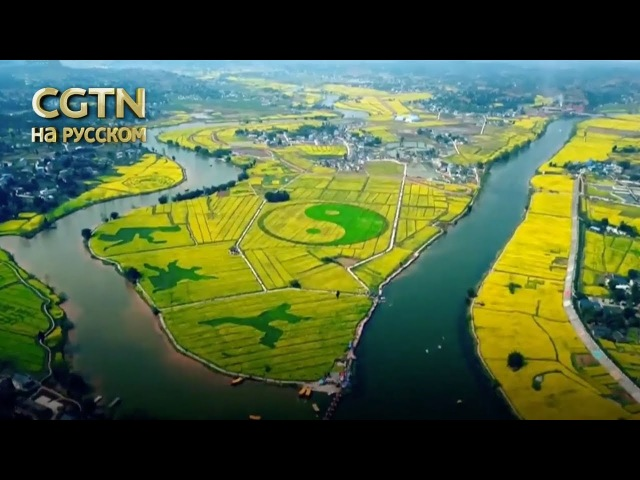 На юго-западе Китая зацвел рапс