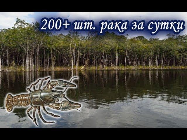 Более 200 раков за сутки. Русская Рыбалка 3.99.