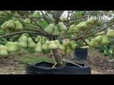 WOW! Worlds Strangest Fruits - That Look Like Aliens