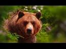 Охота на Весеннего Медведя. Охота в Якутии.