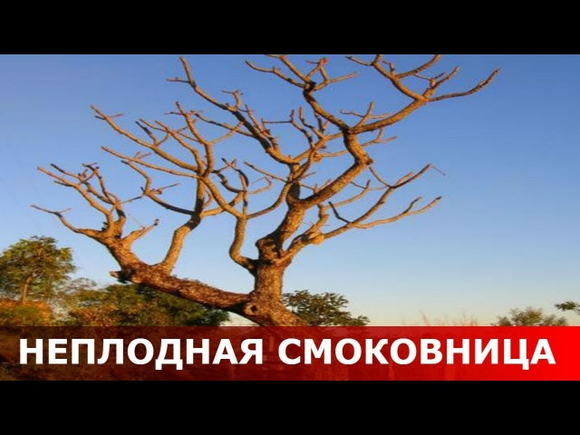 Смоковница неплодная. Священник Игорь Сильченков