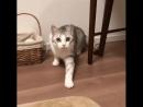 кот повторяет за человеком