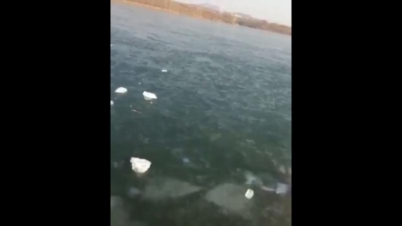 Ушёл под лёд 😳