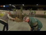 Смех куриного фермера (6 sec)