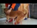 Новые лапки, счастливая собака