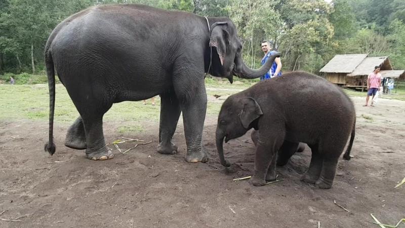 Elephant Dream Valley Chiang Mai Thailand
