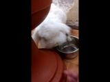 Кроля и тарелка
